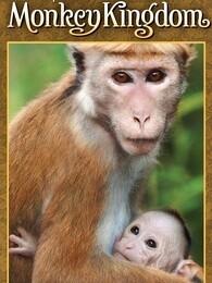 猕猴王国(超清)