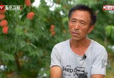 """中国梦365个故事:""""苦恼""""的桃王"""