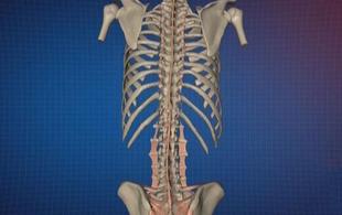 颈腰椎病并非都是骨头上的病