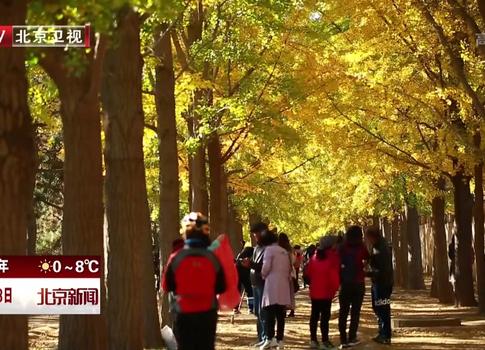 北京推迟清扫林地草坪自然落叶挽留深秋美景