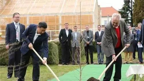 习近平访捷克赠银杏树 捷克总统访华曾赠苹果树