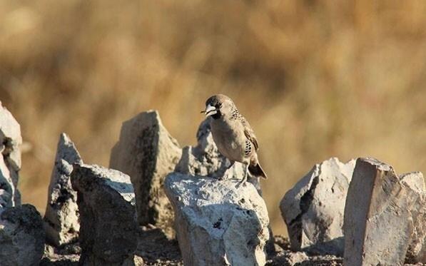 建筑奇迹!1吨重世界最大鸟巢 住500只鸟 - 双梅 - 张静华