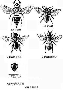 蜜蜂的筑巢本能复杂,筑巢地点