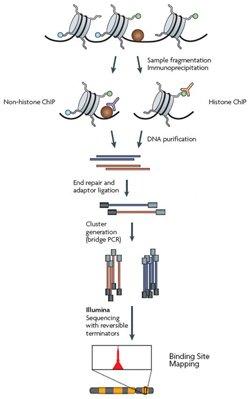 染色质免疫共沉淀