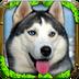 流浪狗模拟安卓版(apk)