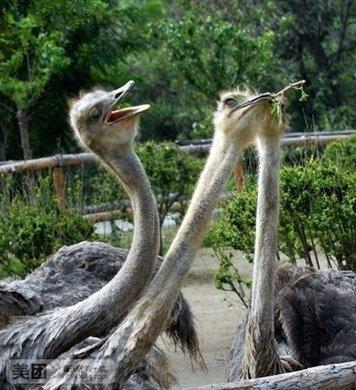 青岛森林野生动物园门票一张