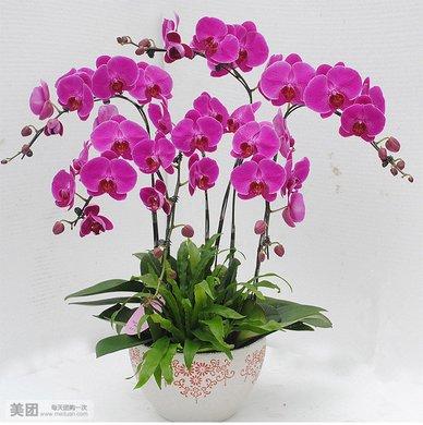花的图片上写上花语,花的图片和名字花语,花的图片及花语