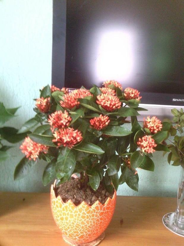 小红花制作图片,皱纹纸手工制作小红花