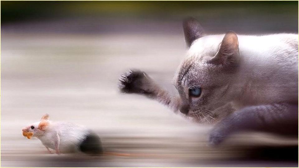 壁纸 动物 猫 猫咪 小猫 桌面 960_540