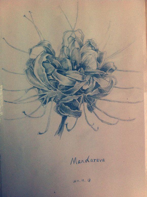 手绘彩铅玫瑰花画法