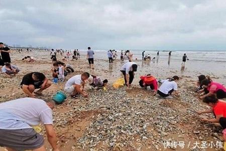 青岛市民捡海鲜一个一麻袋,带你吃0元不限量海鲜盛宴