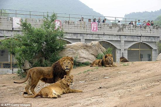 游客在八达岭野生动物园下车