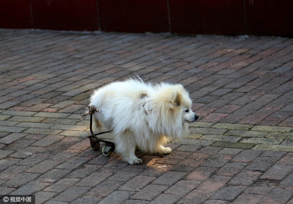 【转】北京时间     半身狗艰难前行触动街边小孩 - 妙康居士 - 妙康居士~晴樵雪读的博客