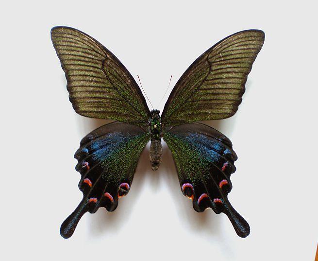 昆虫 桌面 655_537
