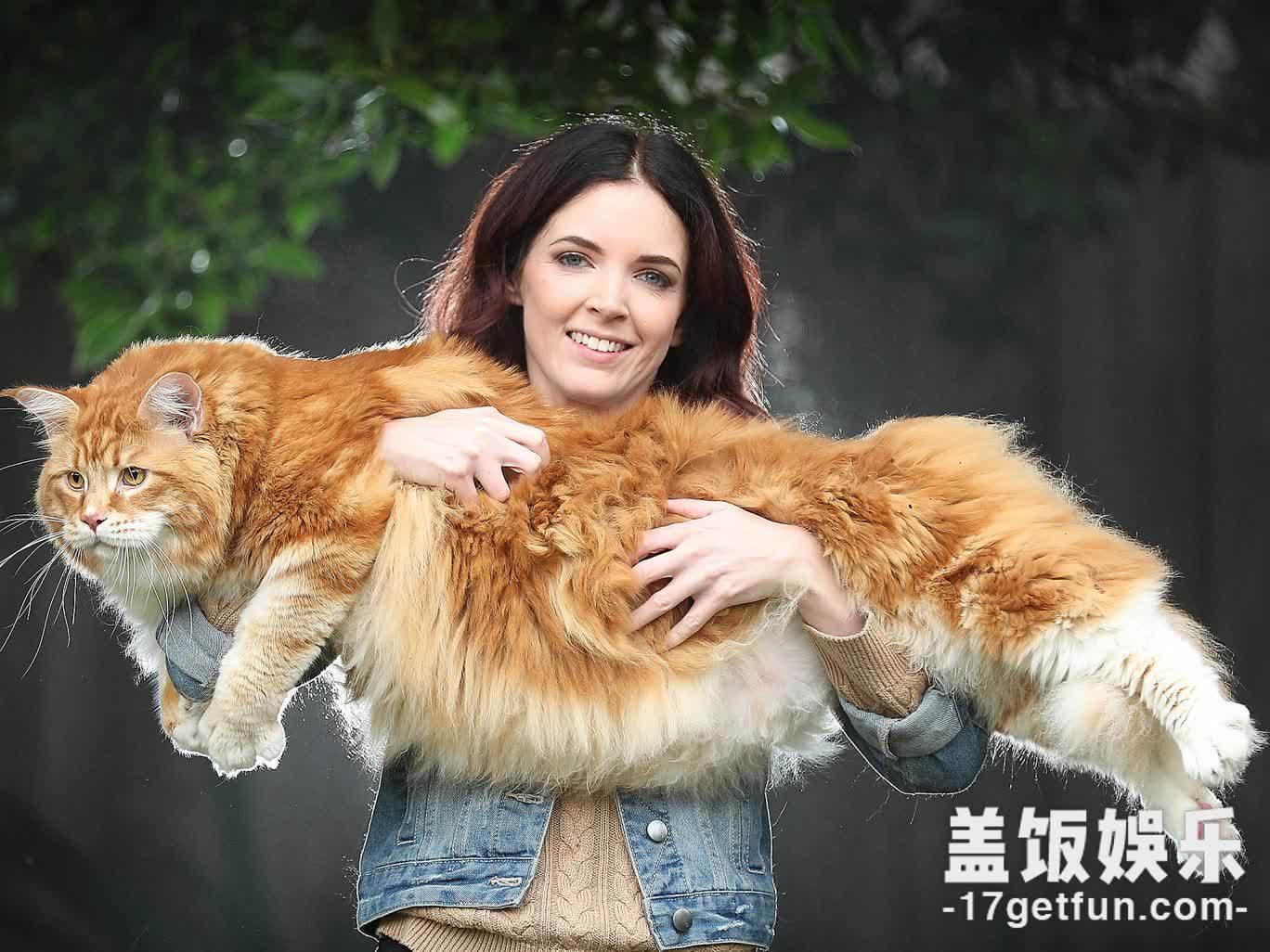 橘猫你不要挣扎了,你是最胖的