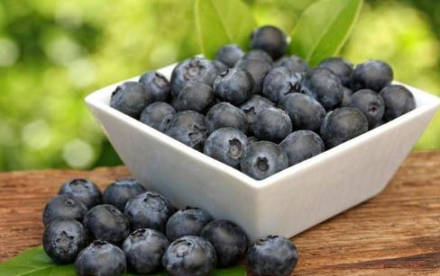 蓝莓生态园