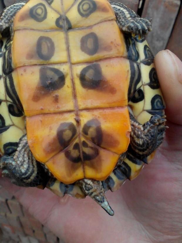 怎样饲养巴西龟