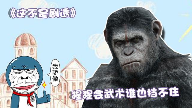 《这不是剧透》147期:猩猩会武术谁也挡不住