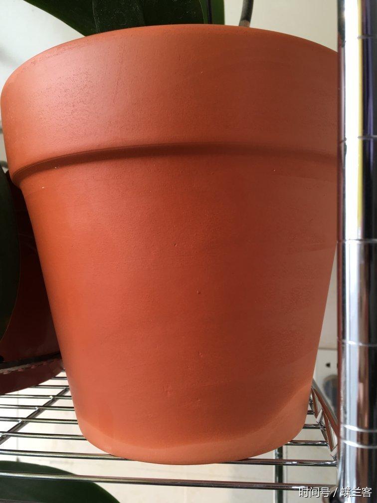 蝴蝶兰水肥如何管理才能花多叶壮?