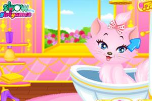 萌萌公主猫