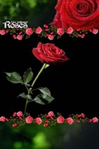 玫瑰 手机壁纸 竖屏 黑色