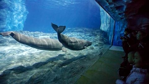 壁纸 动物 海底 海底世界 海洋馆 水族馆 鱼 鱼类 480_270