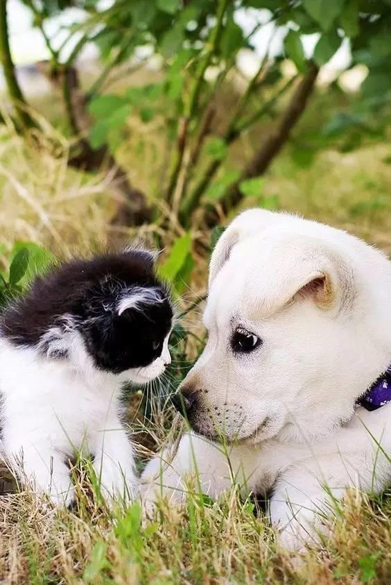 小动物的爱情,太可爱了!