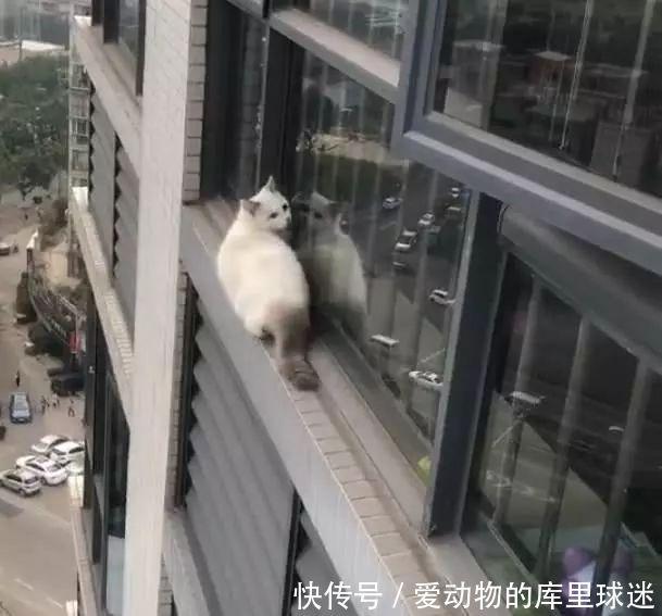 宠主出门忘关窗户,猫咪偷偷爬出,回来看到这一幕让她心碎不已