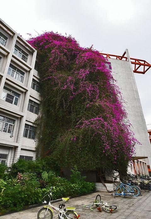 广西大学鲜花瀑布18年长30米