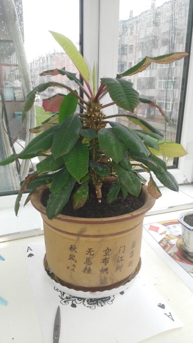 这种室内养殖的树名字是什么?