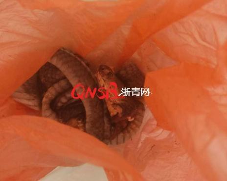 【转】北京时间      大年初一踏青遇70cm长蛇 男子加餐不成反进医院 - 妙康居士 - 妙康居士~晴樵雪读的博客
