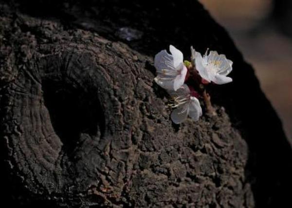 二爷救了条脑袋上长俩肉瘤的蛇,去世时百蛇相送 - 周公乐 - xinhua8848 的博客