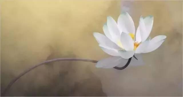 ★ 莲生藕不同 ★ - 美妙穹盡 - 0