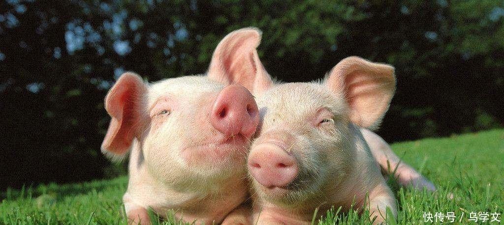 迈出去第一步,生肖猪的前程无量,7月份中旬喜多,钱万丈高!