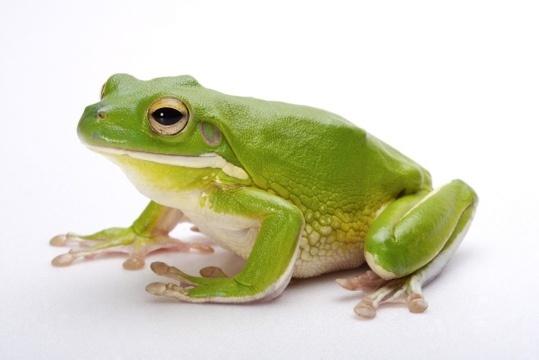 青蛙是什么啊