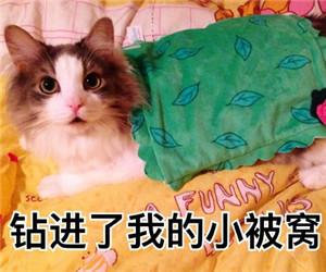 猫咪撒娇表情包2.jpg