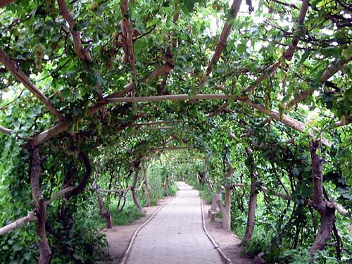 果树葡萄地规划设计图