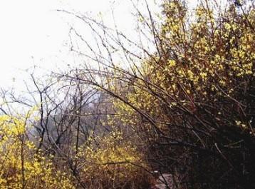 中文名称:凤山风景区 地理位置:福建泉州永福县 开放时间:08:00-18