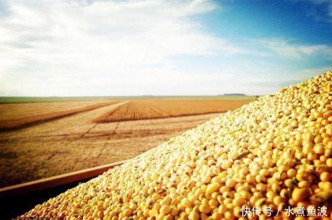 特朗普误判引发严重后果中国大豆问题彻底解决,美豆农眼红不已