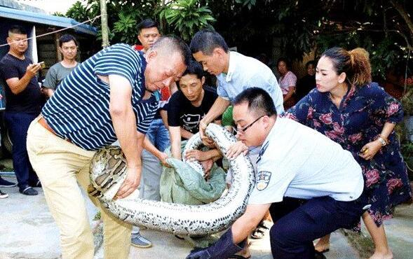 【转】北京时间      男子关养巨蟒18年 只要一叫名字就从水池中爬出 - 妙康居士 - 妙康居士~晴樵雪读的博客