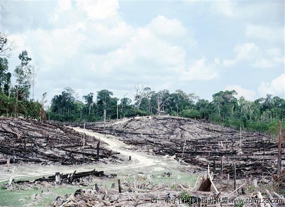 森林是人类赖以生存的生态系统中的一个重要的组成图片