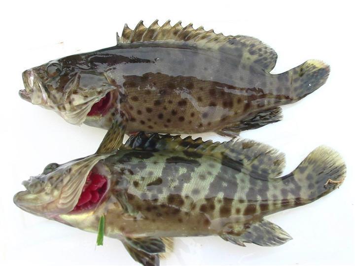 动物夸张图片 变形鱼