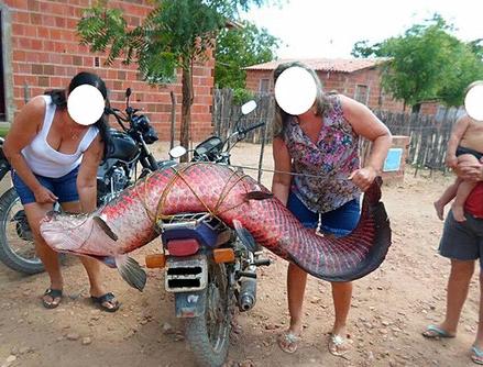 【图片新闻】秘鲁渔夫捞到3米长的巨型鱼 险些将船给打翻了 - 耄耋顽童 - 耄耋顽童博客 欢迎光临指导