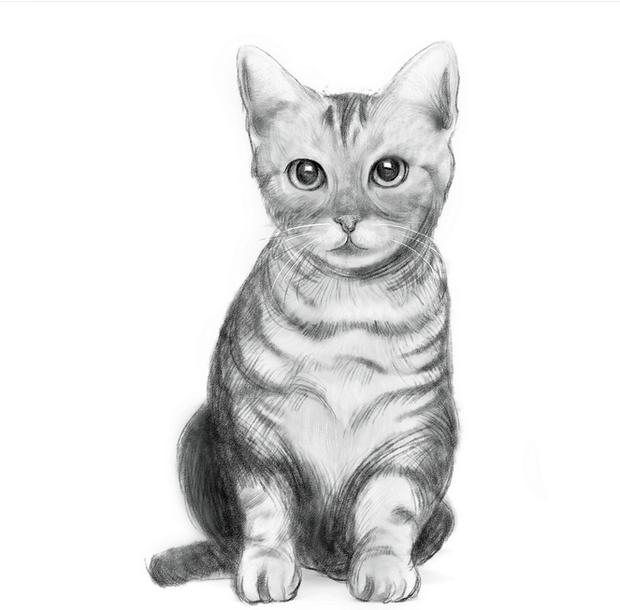 求好心人给猫咪图片要全身的