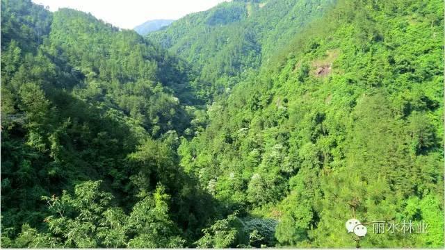 【魅力丽水】白云山的风景有没有惊艳到你? 【图文转载】