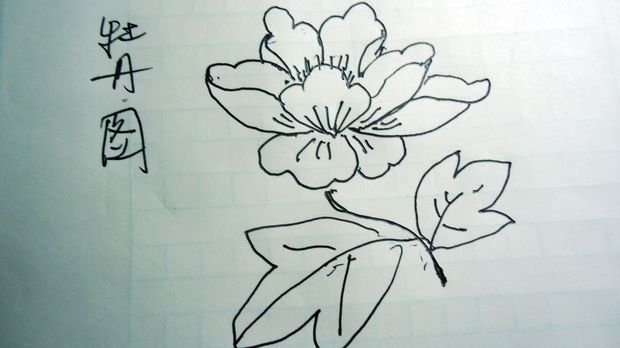 简单的牡丹花怎么画