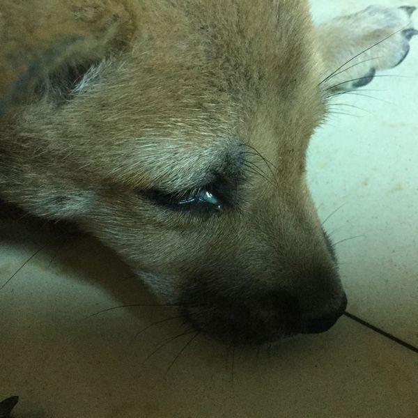 宠物 我家的狗狗眼睛里有点眼屎,吃什么药最好,又可以将副作用减到最