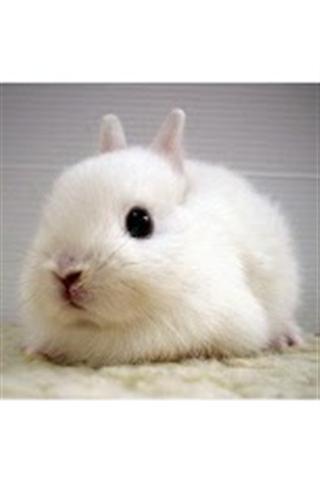 最可爱的小兔子壁纸cutestbunnieswallpaper