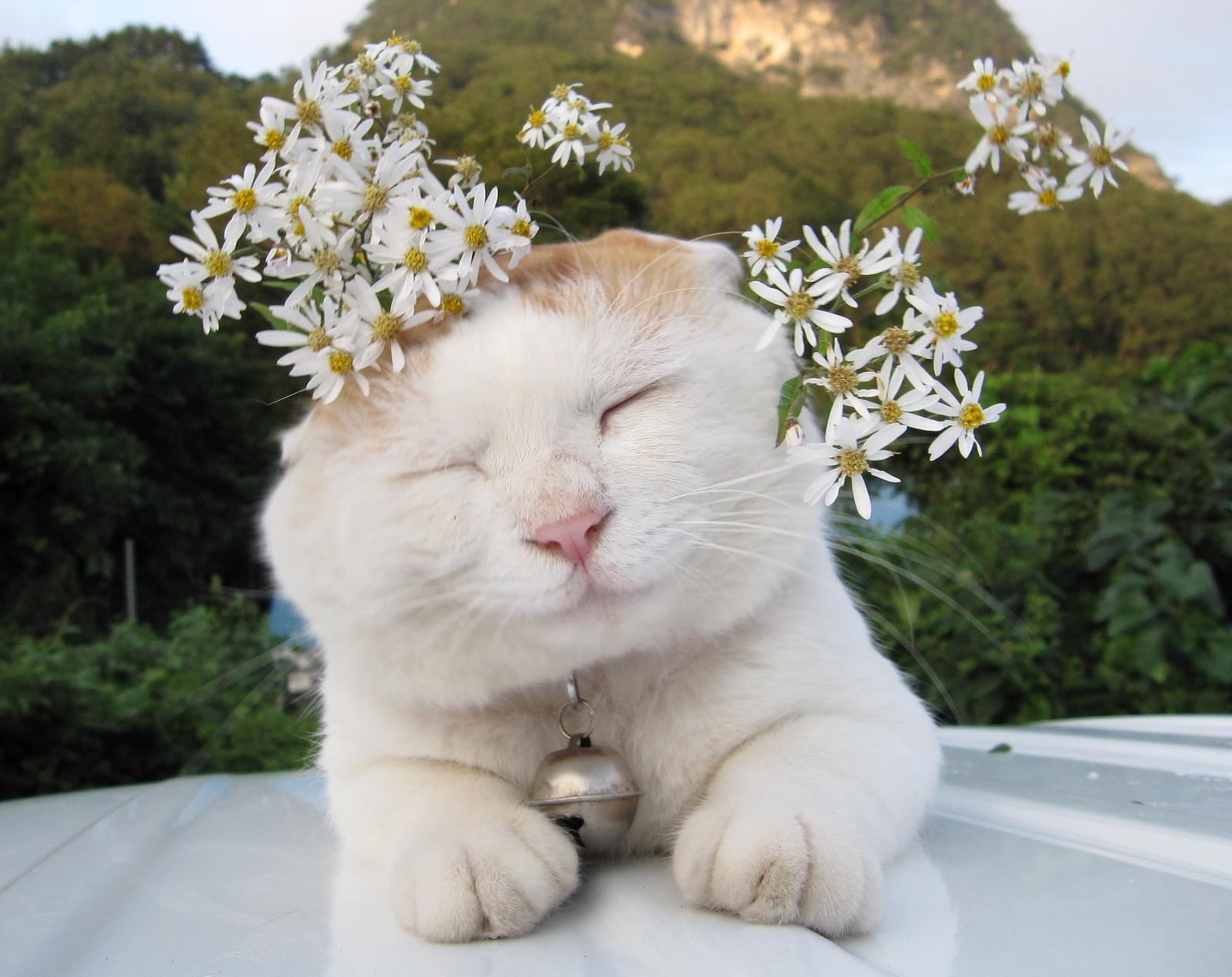 猫科猫属动物的统称