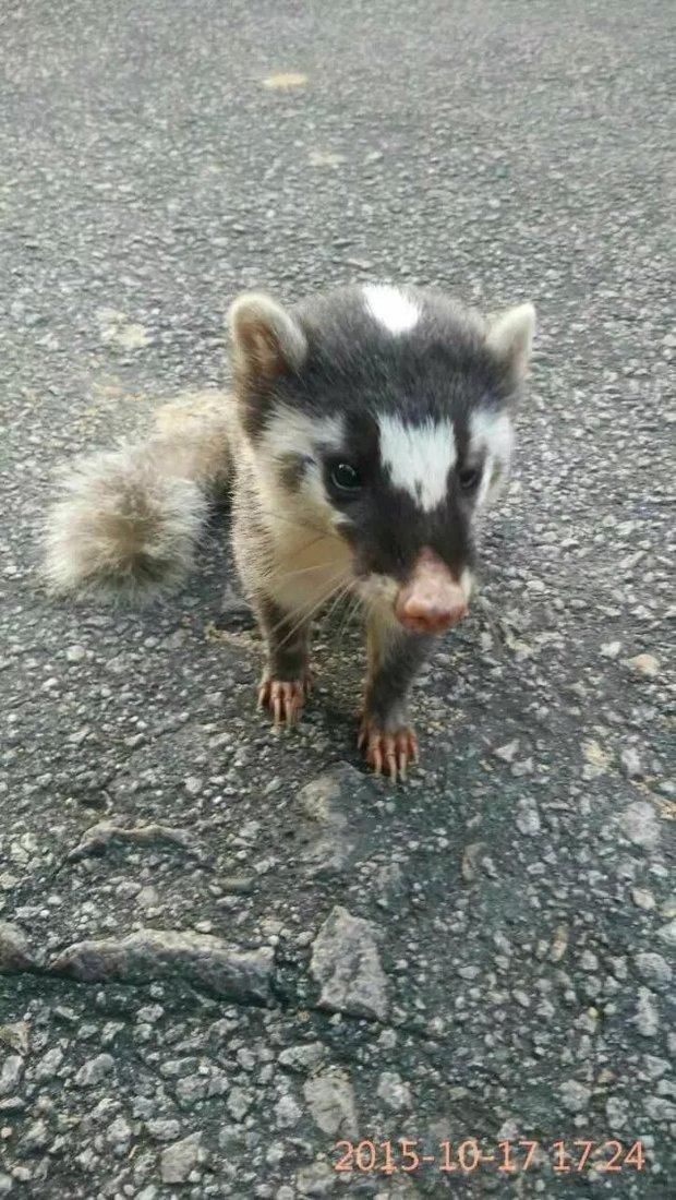 我发现了一只野生动物是什么啊